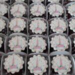Cupcake decorado foto unicórnio